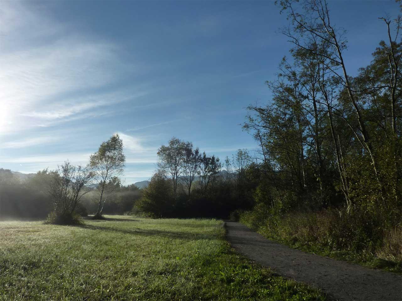 La prairie au matin