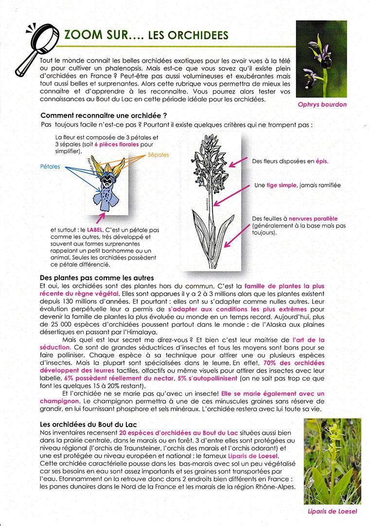 Zoom sur les orchidées 2/2