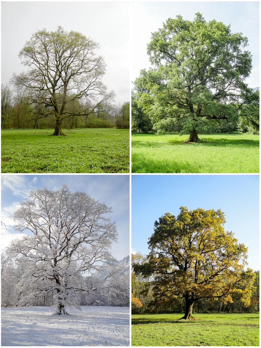 Les 4 saisons du Grand Chêne
