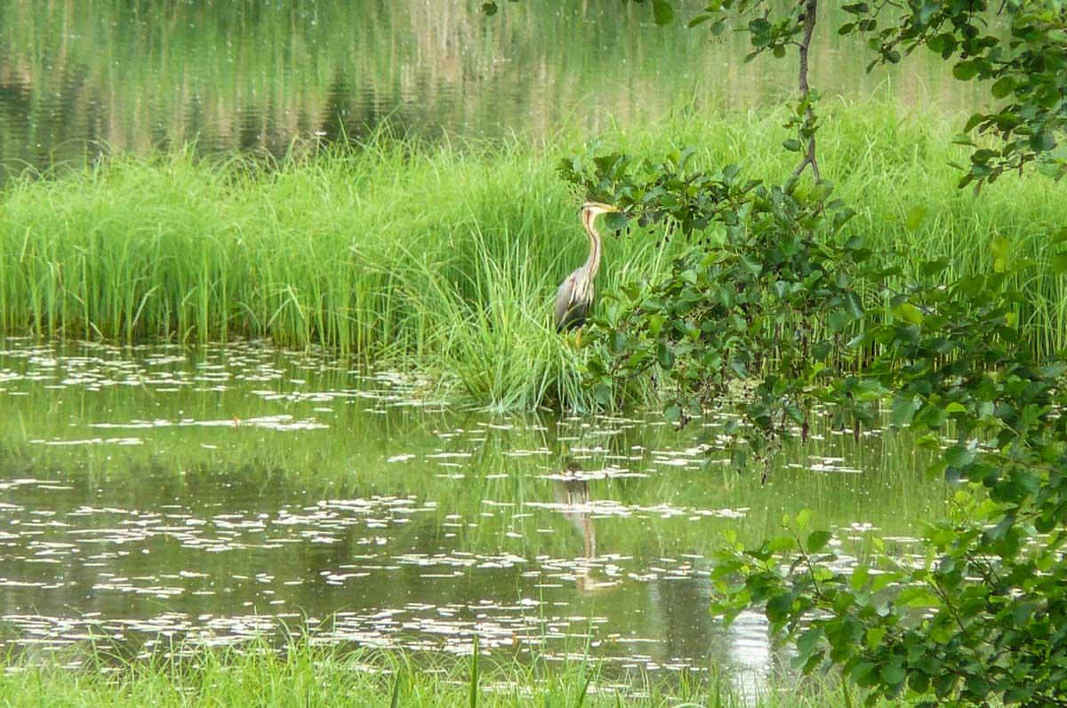 Sortie découverte du lac du Bourget le 26/05/2018