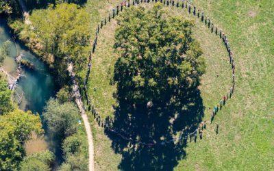 Les secrets de longévité du Grand Chêne…